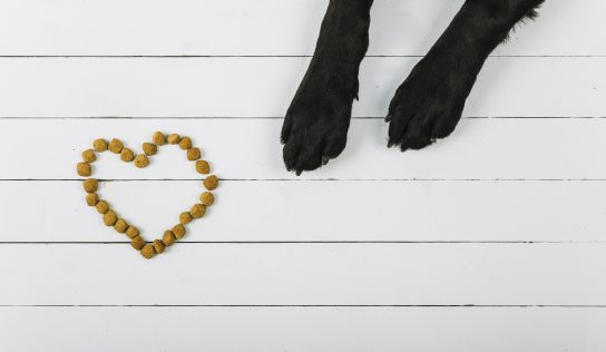 [건강&영양] 성인 고양이&강아지의 필요 에너지량